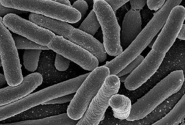 Department of Energy modifies e. coli bacteria to produce biofuel