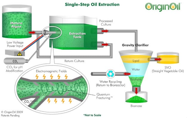 OriginOil looks to build urban algae farm to treat wastewater and generate heat for homes