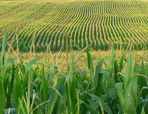 Ethanol may get a boost through breakthrough process