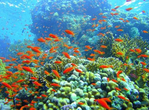 How Alternative Energy can help Ocean Acidification