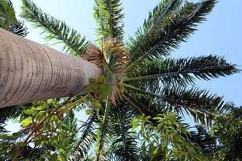Wind Turbine Tech - Palm Tree
