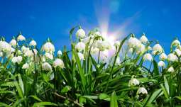 solar energy hydrogen production - plants in sunlight - nature