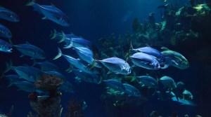 Tidal power turbines - marine life - fish