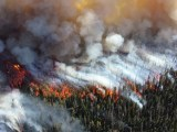 Wildfire smoke - forest fire and smoke