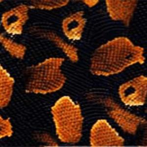 Python orange