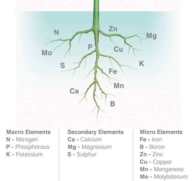 Nutrients - Macronutrients N-P-K