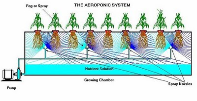 An Aeroponic System