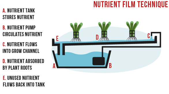 nutrient film technique