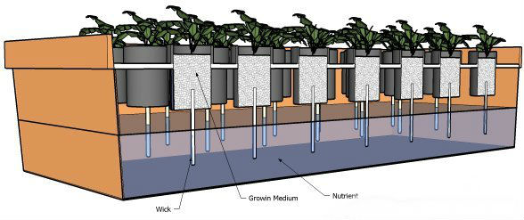Wick_hydroponics-system