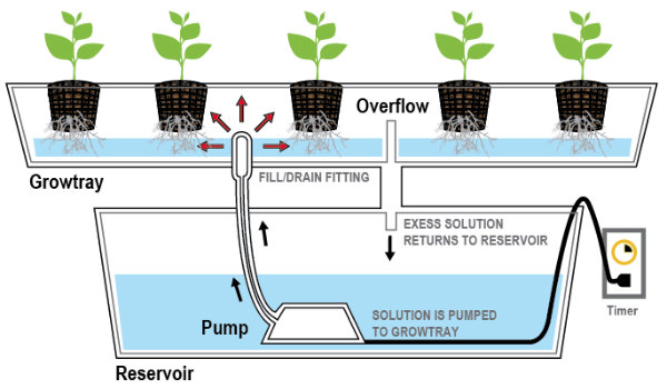 flood and drain Hydroponic-System