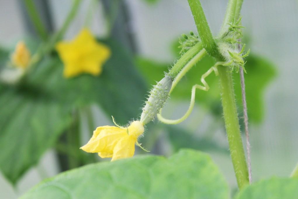 Flowering plants need pk 13/14