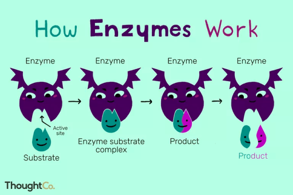 how do enzymes work in CANNAZYM
