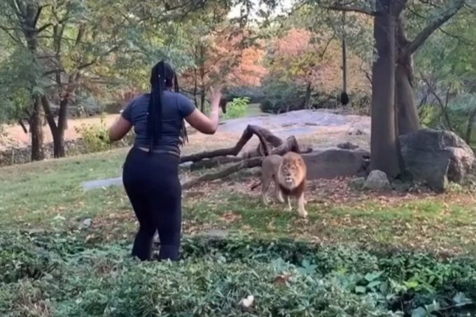 NY Woman Jumps Lion Cage & Escapes without a Scratch