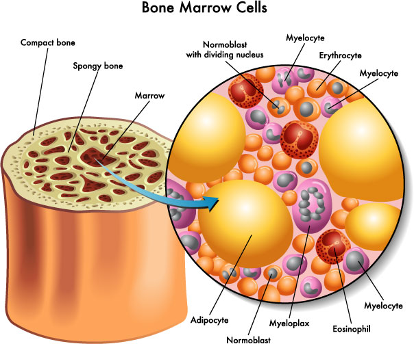 """Once upon a time Life  -The Bone Marrow"""