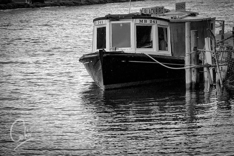 Blackbird on the Yarra. Most of the riverboats keep a low profile so that they can travel under the many bridges on their journeys. #yarrariverboat #bwphotography #shotoniphone #lightroom #instamelbourne #footscray #boat #transportation