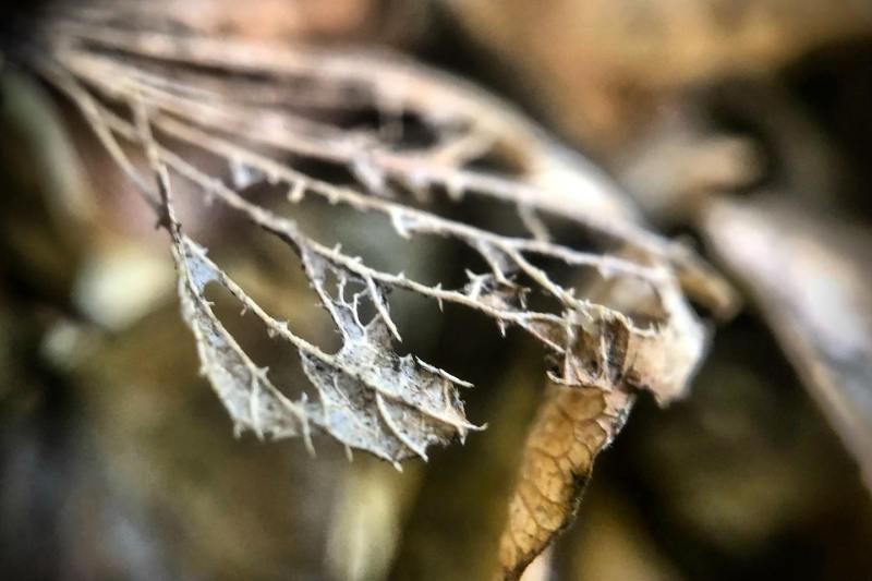 Entropy. Decay. #entropy #decay #naturephotography #leaves #shotoniphone