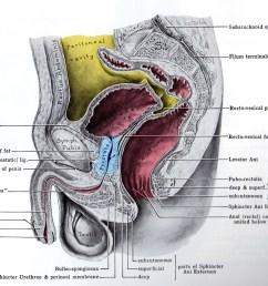 prostate jpg [ 1864 x 1484 Pixel ]