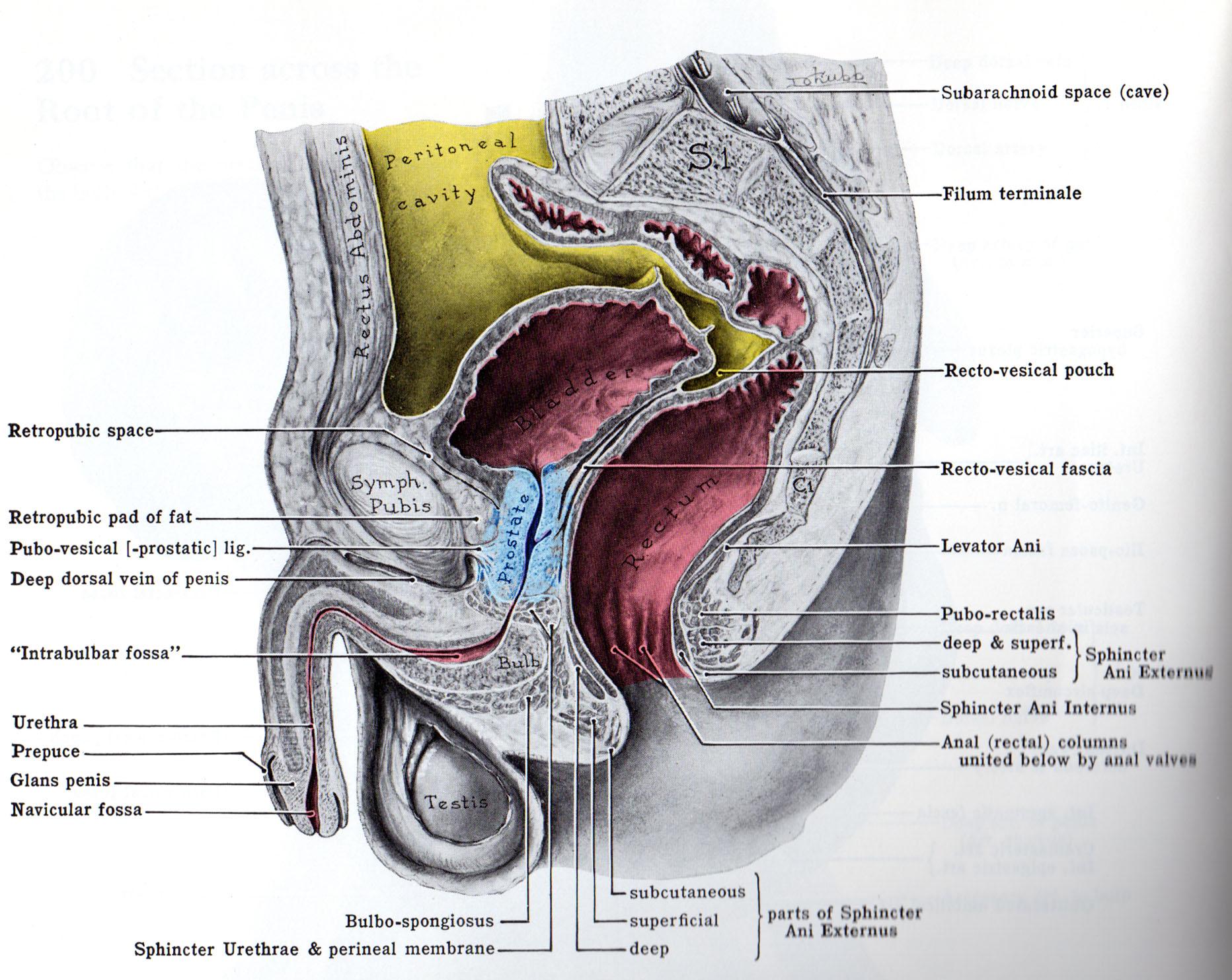 hight resolution of prostate jpg
