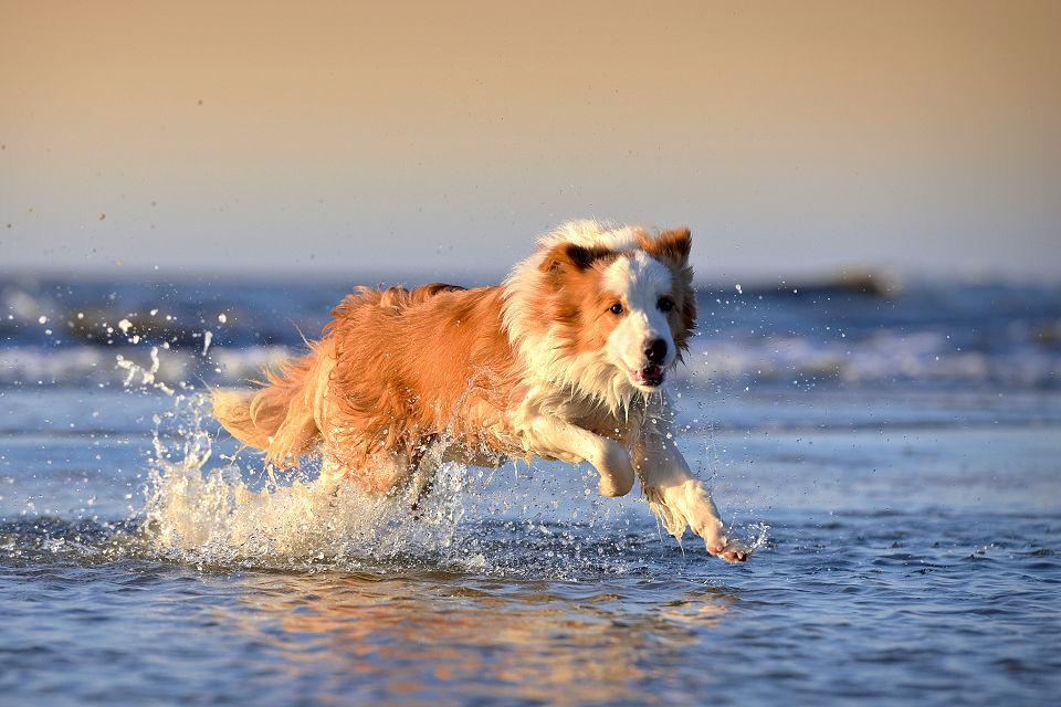 Hondenfotografie11