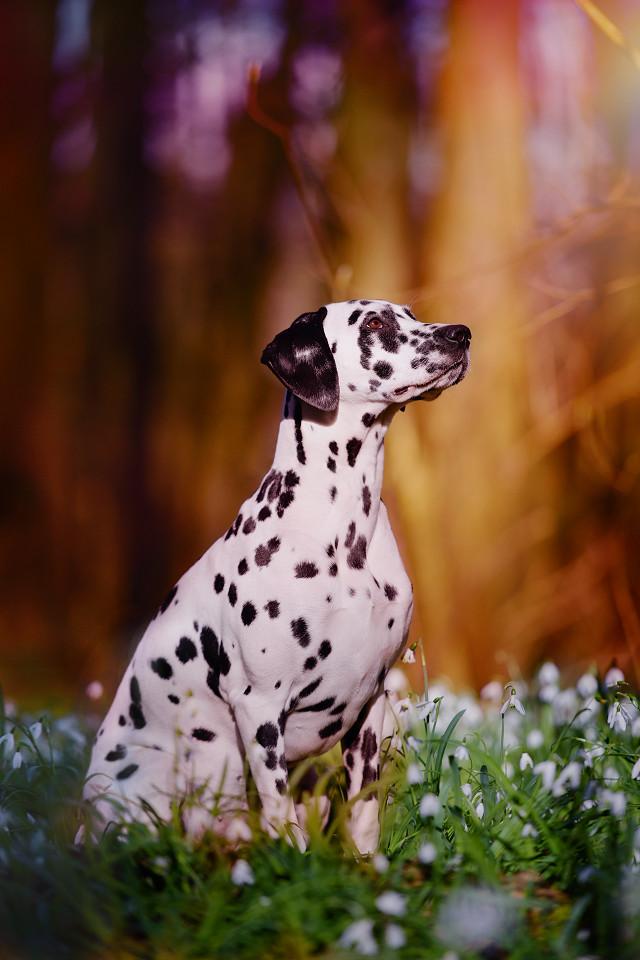 Hondenfotografie13