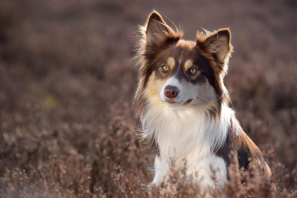 Hondenfotografie16