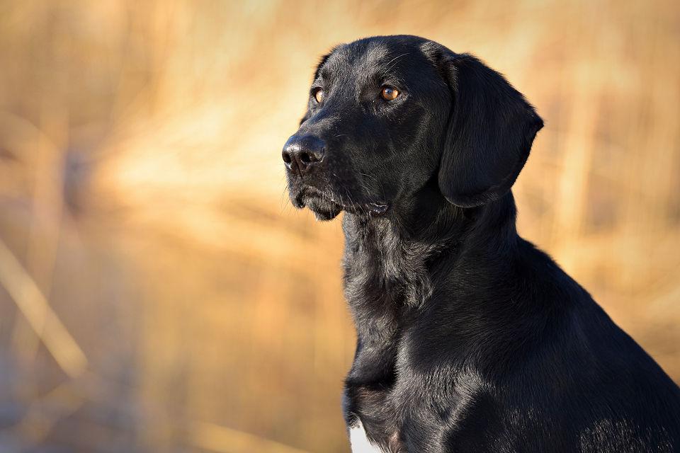 Hondenfotografie26