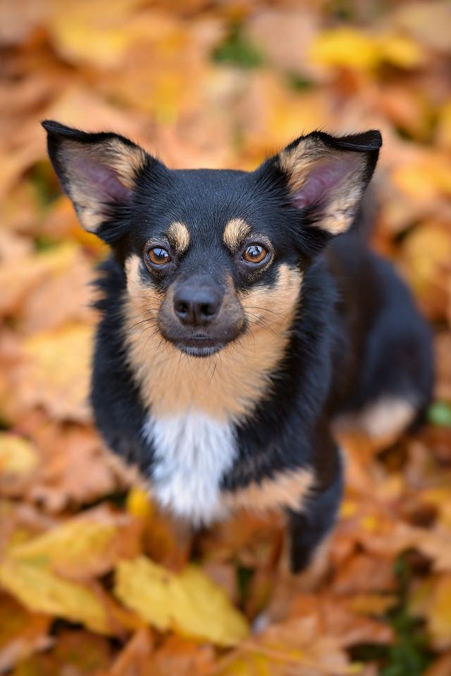 Hondenfotografie35