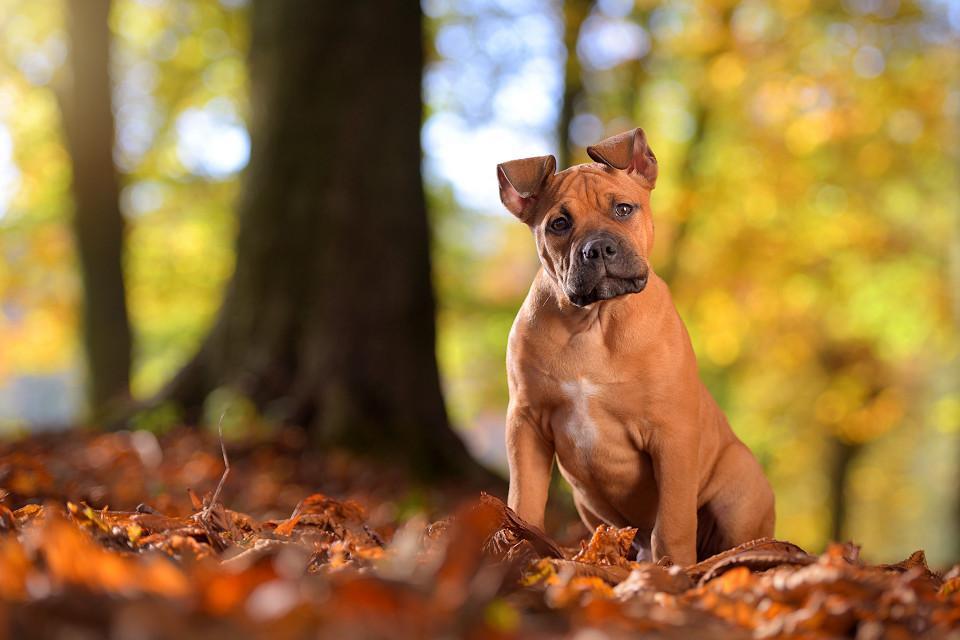 Hondenfotografie37