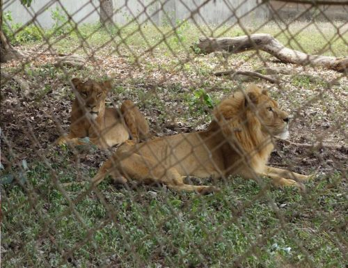 Ibadan Zoo