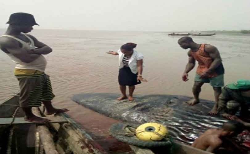 Giant whale killed in Ondo State after it washed up to the shore