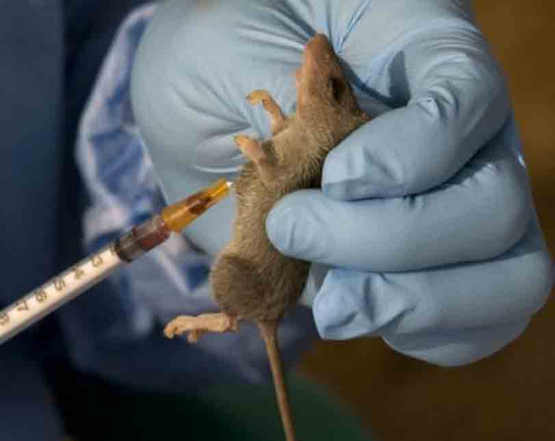 Lassa fever: C'River embarks on sensitisation of border communities