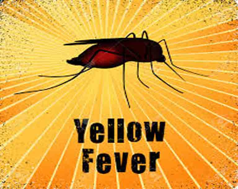 Yellow fever spreads to 16 states, kills 45