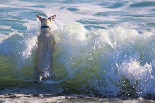 dog playing water