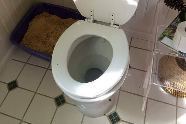 Come sturare il wc intasato  Icasa arredamento e design