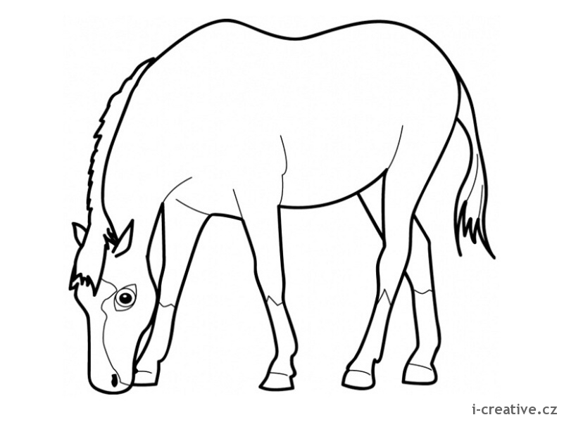 Horse Eating Grass Drawing