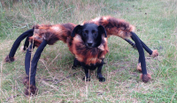 A Dog In A Tarantula Costume Is Unleashed On Strangers