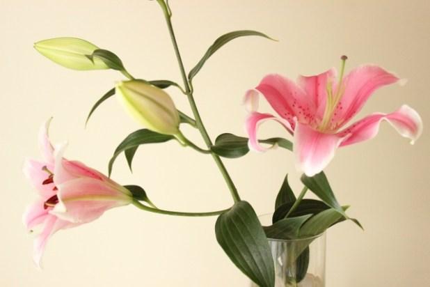 ユリの花が咲く順番