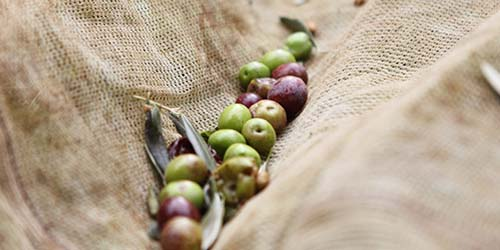 Oliven in der Perspektive