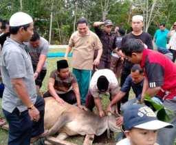 IAIN Padangsidimpuan Gelar Sholat Idul Adha 1439 Hijriyah dan Sembelih 5 Ekor Hewan Qurban