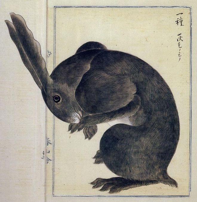 Rabbit x Takagi Haruyama