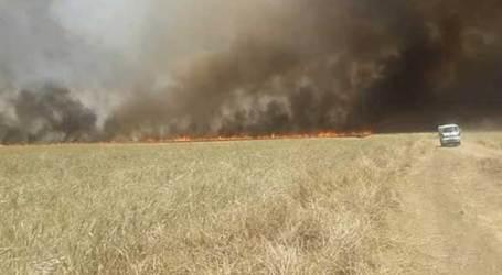 الحرائق تلتهم مساحات زراعية جديدة بالسويداء.. ومواطنون يطالبون السلطة بالتحرك