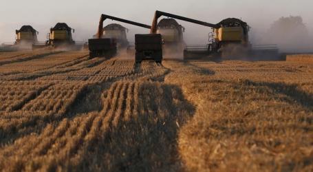 الحكومة المؤقتة تضع سعر شراء القمح أعلى من السلطة السورية