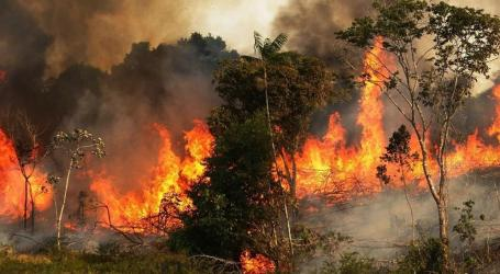 الحرائق تلتهم مساحات واسعة وسط وغرب سوريا.. من المستفيد؟