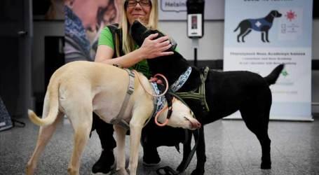 كلاب مدربة تكتشف المصابين بفيروس كورونا في مطار هلسنكي