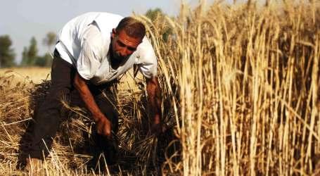 """سوريا.. حملة """"عام القمح"""" في طريقها إلى الفشل"""