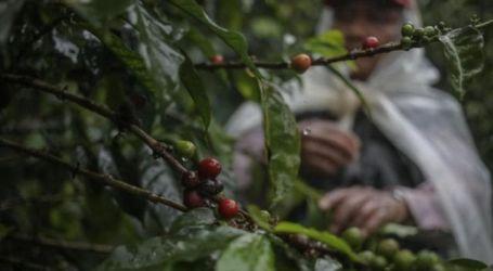 أسعار القهوة تحلّق في الأسواق السورية