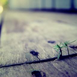 Missons Organizations Have Cracks [Part 4] – Do I Regret Going?