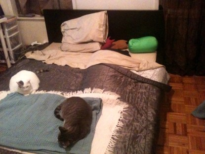 Bed with Cats