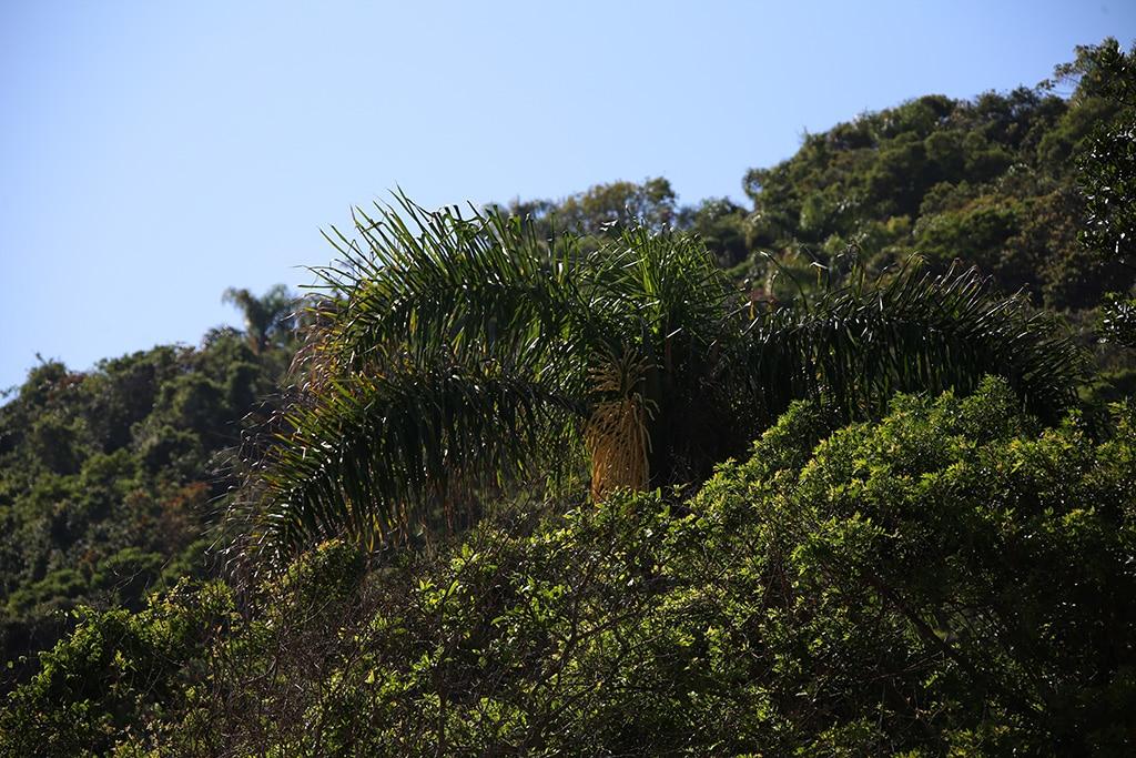 Praia-do-InglêsBombinhas-Brasil-13