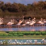 f-flamingo1a